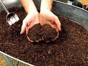 Торене на почвата със спящ чай