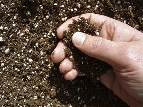 Почвата, оплодена с урея