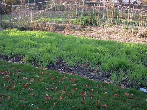 Есенно зелен тор в леглата