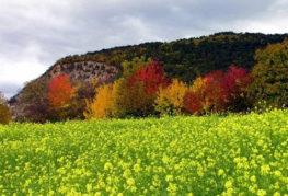 Сеитбата на зелен оборски тор през есента преди зимата
