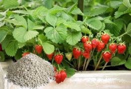 Торове UAN за богата реколта