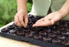 Засаждане на семена в торфени таблетки