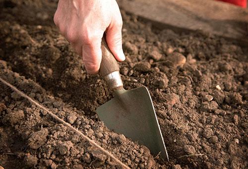 Подготовка на почвата за засаждане на разсад