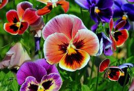 Многоцветни гащички