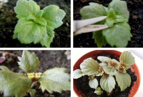 Размножаване на цветя