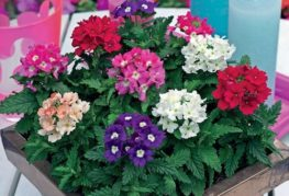цветни цветя
