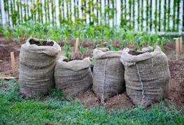 Картофи, растящи в торби