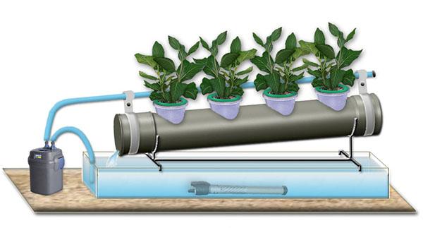 Хидропонно растение