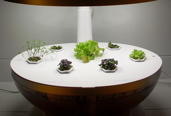 Зелените в хидропонна настройка