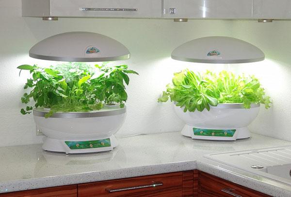 Хидропонни растения в кухнята