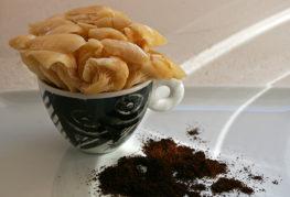Гъби на кафе основа