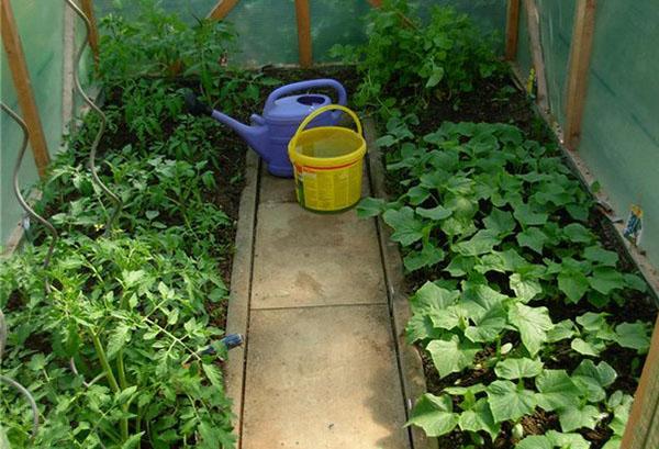 Краставици и домати в оранжерия