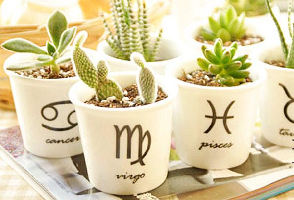 Растения с зодиакални знаци