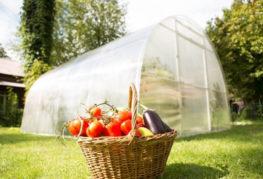 Реколтата от оранжерийни зеленчуци