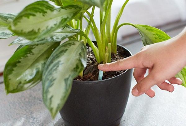 Грижа за стайни растения