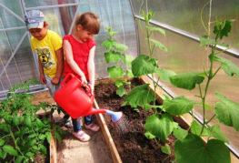 Деца, които поливат краставици в оранжерия