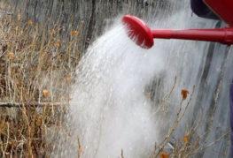 Обработка на касис с вряла вода