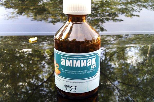 Амоняк