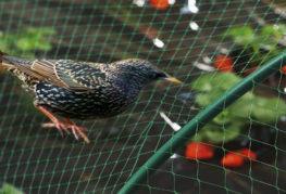 Мрежа за защита от птици