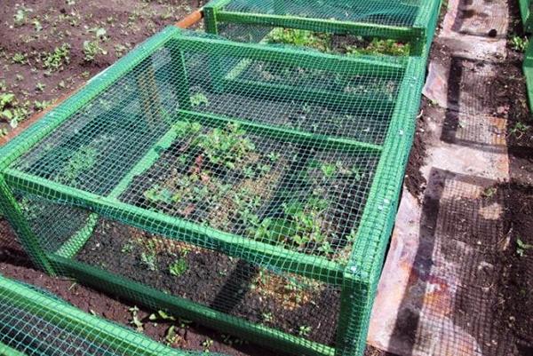 Защитна мрежа върху рамката над ягодите