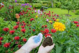 Горна превръзка на градински цветя в земята