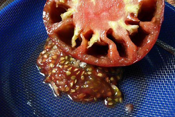 Извличане на семена от домат