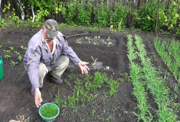 Човек реже копър в градина