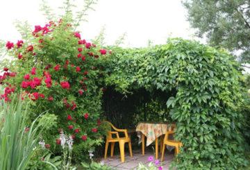 Беседка под гроздето на момичето в градината