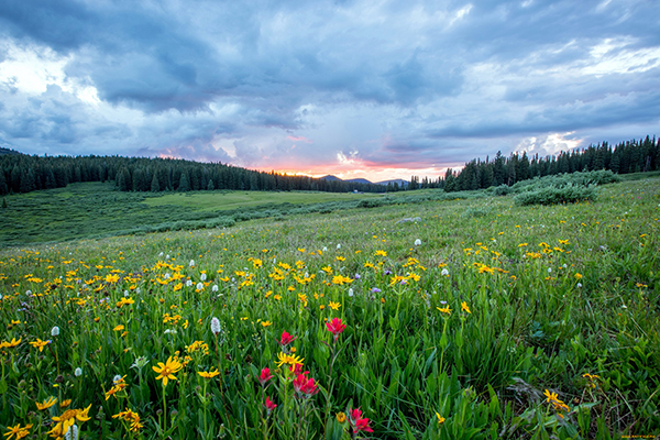 Цъфтяща поляна